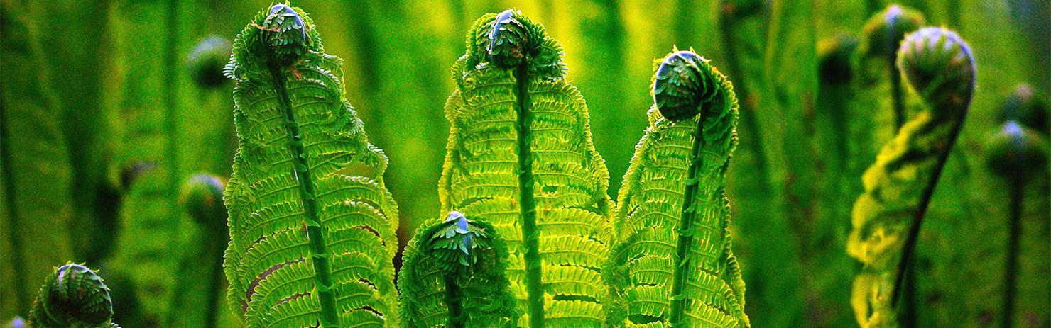 取之天然:用于自然:植物保健:和谐植保